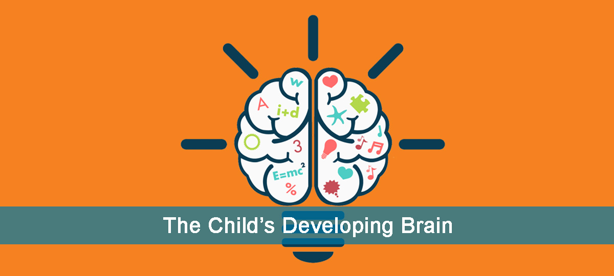 the childs developing brain